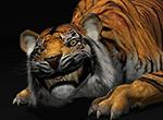 tiger_rig