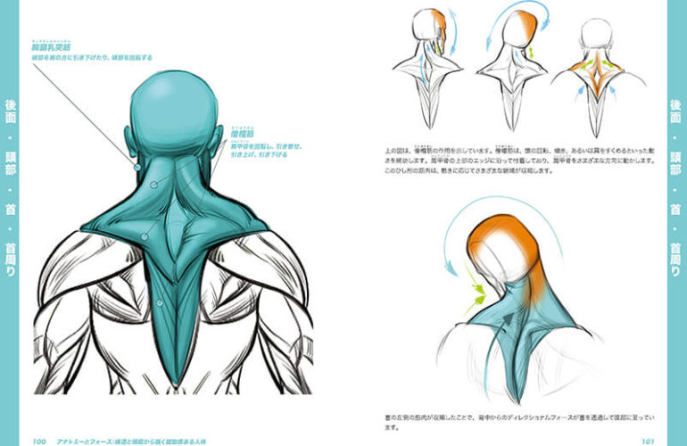 anatomy-force_2