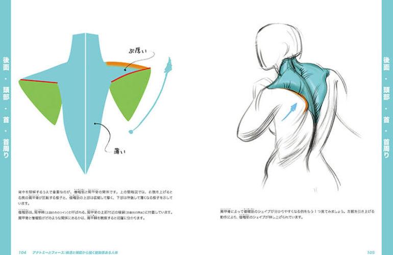 anatomy-force_3