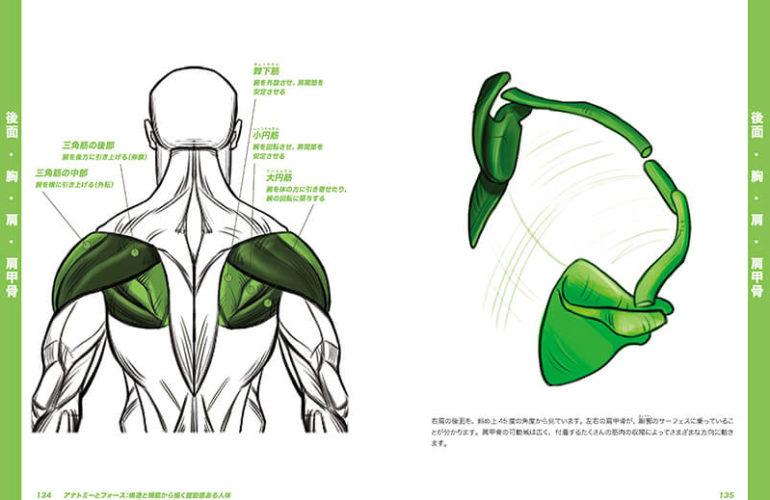 anatomy-force_4