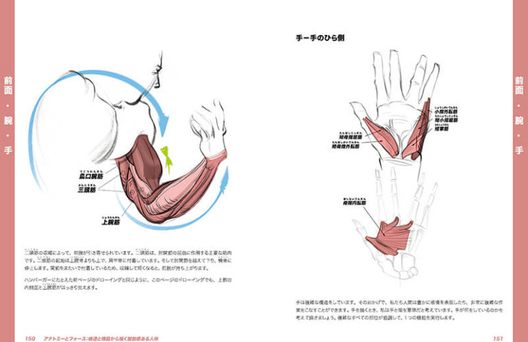 anatomy-force_6